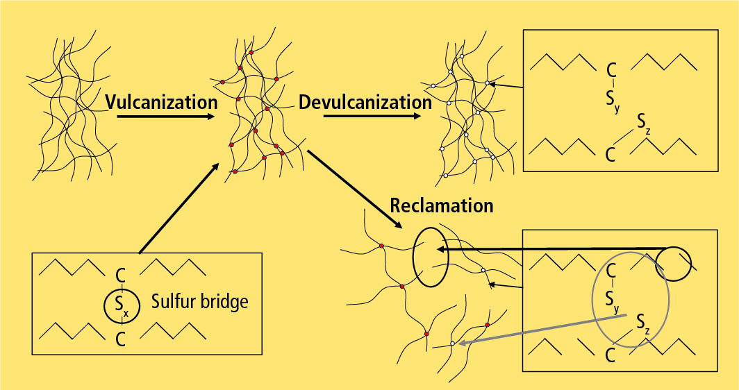 Ideally only the sulfur bridges are broken up in the devulcanization process while the polymer chains stay intact.