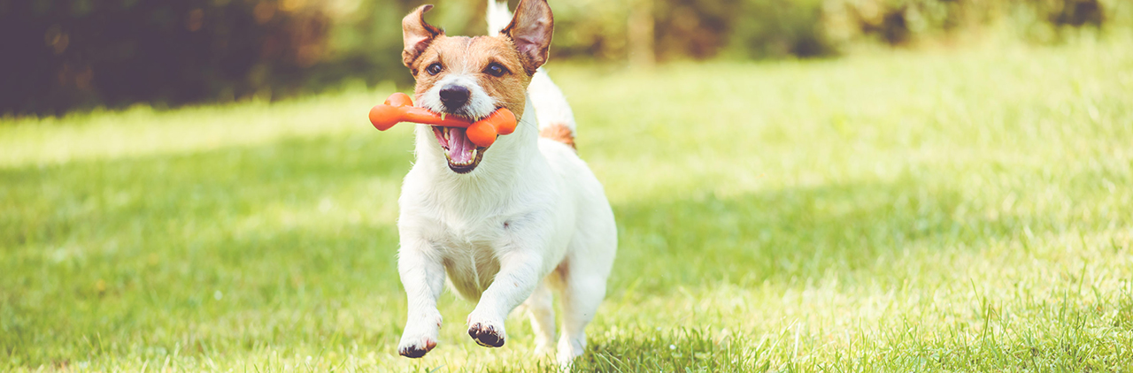 The Monprene CP-16500 series is specifically designed for dog toys. (Source: Teknor Apex)